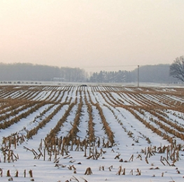 Snowy Empty Wheat Field
